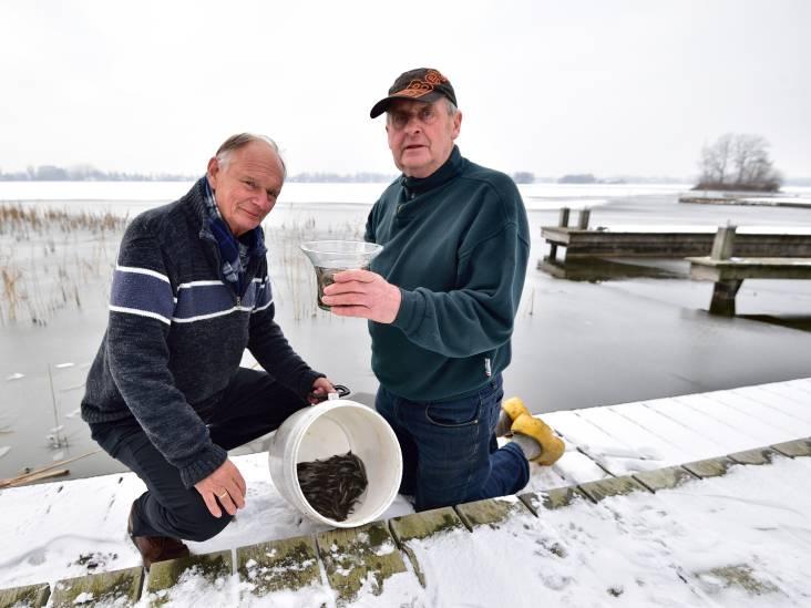 Reeuwijkse Plassen duizenden palingen rijker