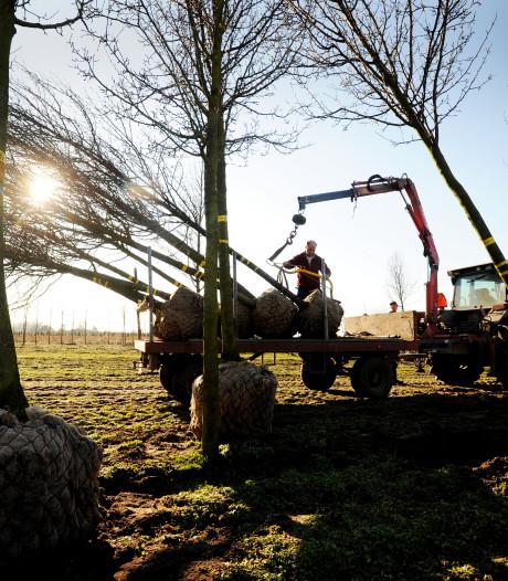 Grave flink in het nauw door boomteeltbeleid
