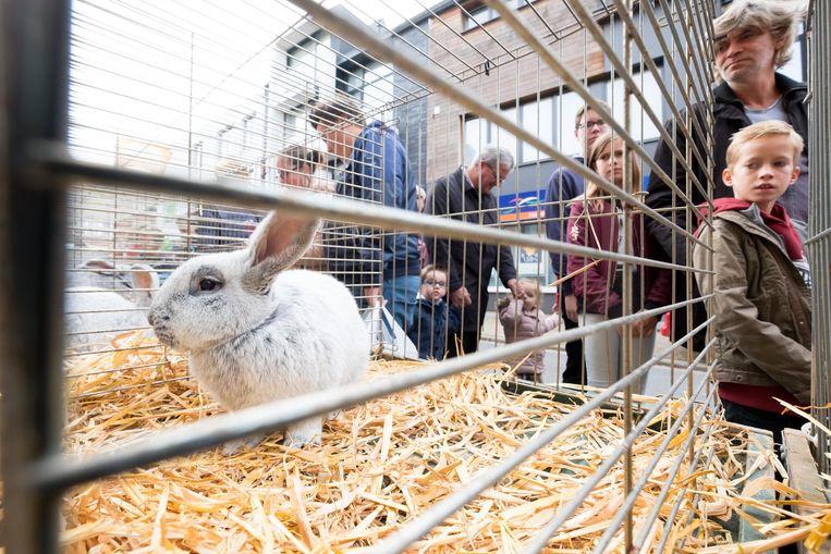 Van konijnen over ezels en paarden tot geiten, het was allemaal te zien op de jaarmarkt.