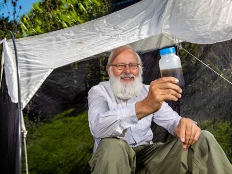 Kees van Achterberg doet onderzoek naar sluipwespen, en dat is belangrijker dan je zou denken