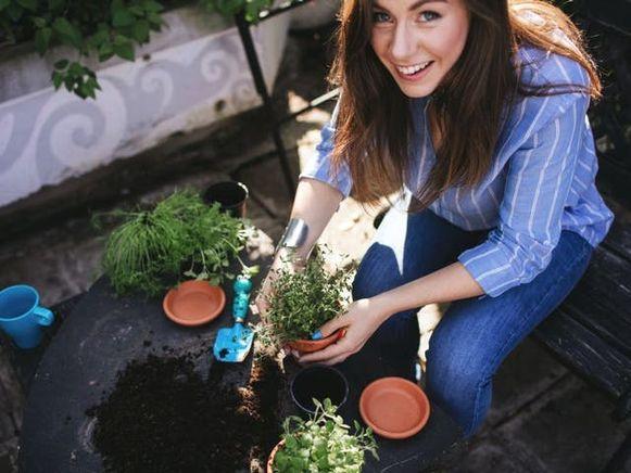 Heb je een kleine tuin of alleen een terras of balkon? Dan kan je sla, kerstomaatjes en kruiden kweken in bakken of potten.