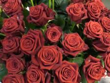 Valentijnsrozen van kweker tot koper: dit is de route die ze hebben afgelegd
