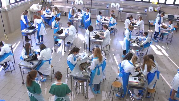 Studenten aan het werk op de faculteit dierengeneeskunde in Merelbeke