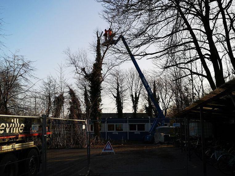 De brandweer kwam langs om in het park achter basisschool Mandelbloesem twee bomen te verwijderen.