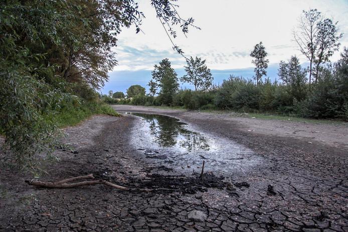 Er staat nauwelijks nog water in de Rhedense kanovijver.