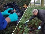 Rattenoverlast in Breda: Het is onze eigen schuld