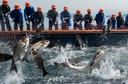 Chinese vissers halen een net met karpers op bij het Qiandaohu-meer in de provincie Zhejiang. Foto Johannes Eisele