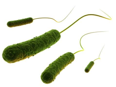 Illustratie van een E.coli bacterie.