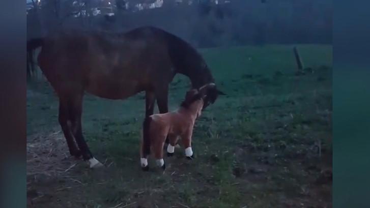 Paard kan grap niet waarderen