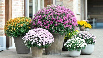 Gemeente Aalter neemt vanaf maandag verwelkte bloemen weg op kerkhoven