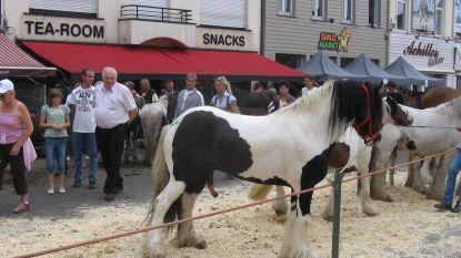 """""""Meer water en schaduw voor paarden op Paardenmarkt"""""""