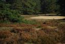 Een van de foto's op basis waarvan experts konden zien dat er een wolf op de Veluwe loopt.