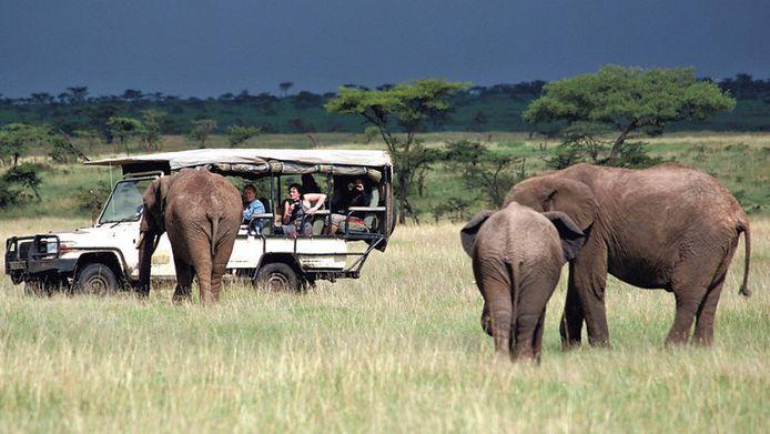 In het wildreservaat Masai Mara naderen de olifanten tot op oogafstand.