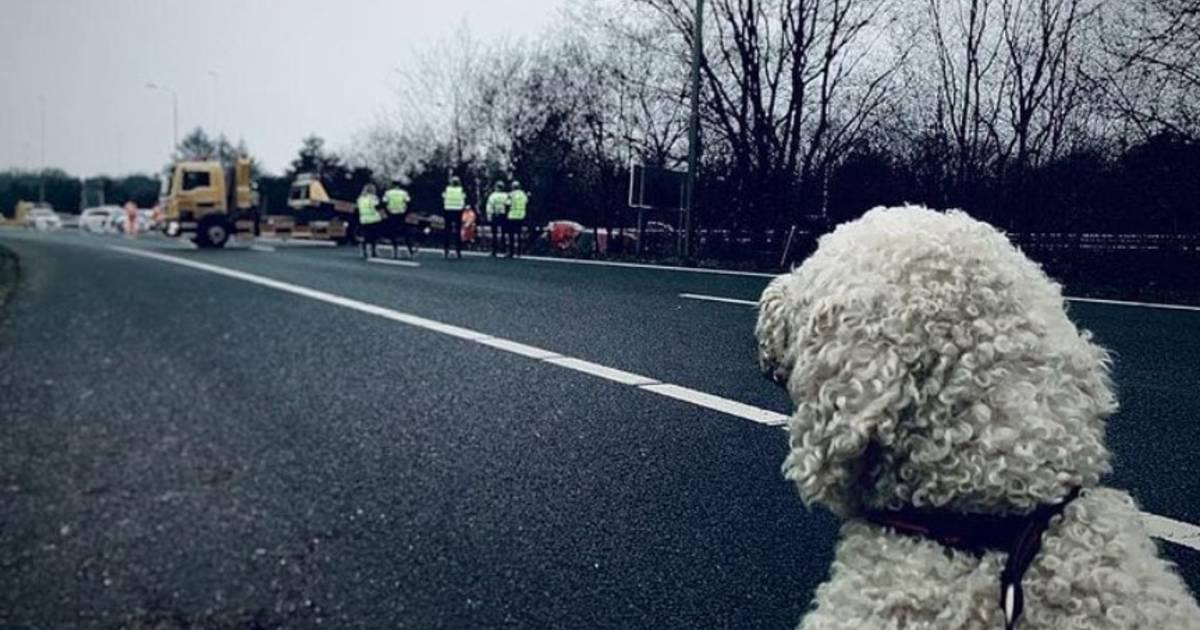 Hond kijkt toe nadat hij met baasje ongeluk had op A50.