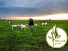 Windmolens of woningen in de Utrechtse polder Rijnenburg? De ogen zijn gericht op de nieuwe Tweede Kamer