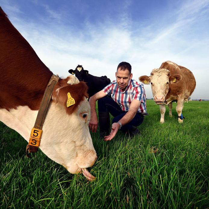 Jack Verhulst bij zijn koeien die alleen gras eten.
