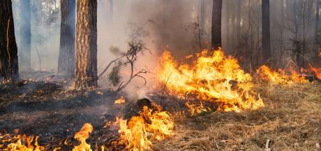 Nog zeker 2 jaar tbs voor brandstichter natuurgebieden Denekamp