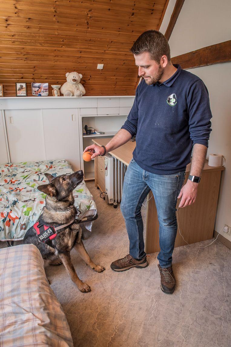 Aarseels hondentrainer Frederik Desmet leerde zijn honden bedwantsen detecteren.