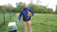 Opgelet hondenbaasjes! Incovo en politie controleren volgende week op hondenpoep-storters