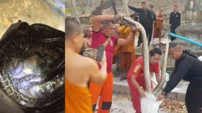 Monniken vinden zes pythons in een toilet in Thailand