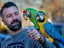 De papegaaien van vogelgoeroe Dirk-Jan zijn populair in het hele land: 'Ze kunnen zelfs verliefd op je worden'