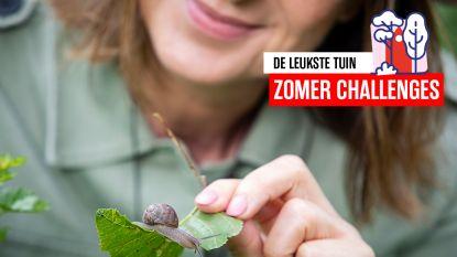 Van wapen tegen slakken tot goedkope anti-onkruidtruc: deze 7 tuintoepassingen van zand kende je nog niet