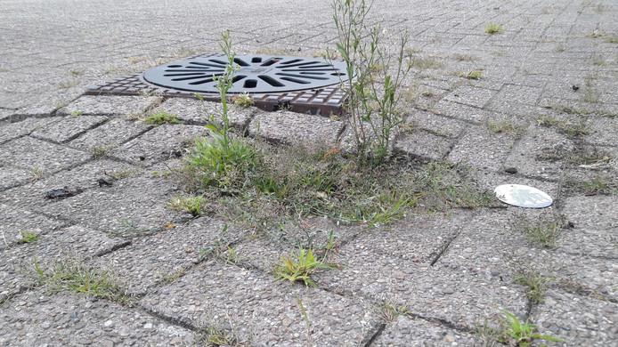 De putten in de Mussendonk liggen centimeters hoger dan de rest van de straat.