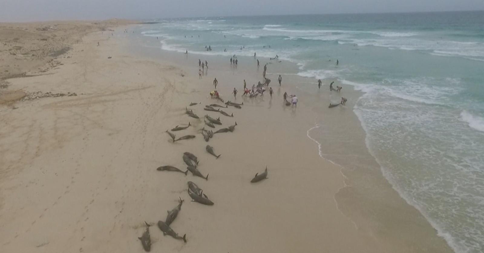 136 dauphins morts sur une plage au Cap-Vert