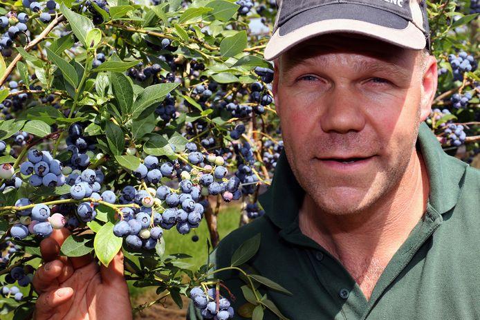 Tom Mertens van Local Harvest tussen de blauwe bessen.