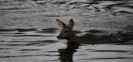 Bandweer redt twee reeën uit kanaal bij Daarlerveen