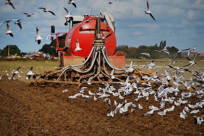Boeren die stoppen met hun bedrijf, kunnen voortaan in sommige provincies hun stikstofrechten aan andere bedrijfstakken verkopen.