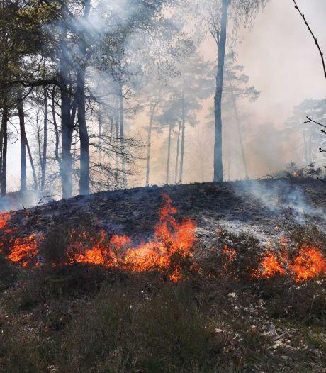 Politie pakt man op wegens aansteken natuurbrand Aerdenhout