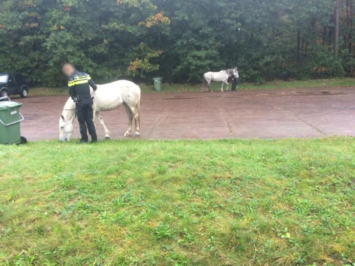 De paarden konden op de carpoolplaats wachten op hun eigenaar.