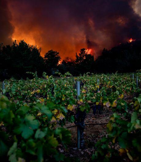 Bosbranden leggen beroemd wijngebied Napa Valley in Californië in de as