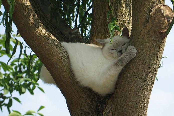 Kat uit de boom kijken