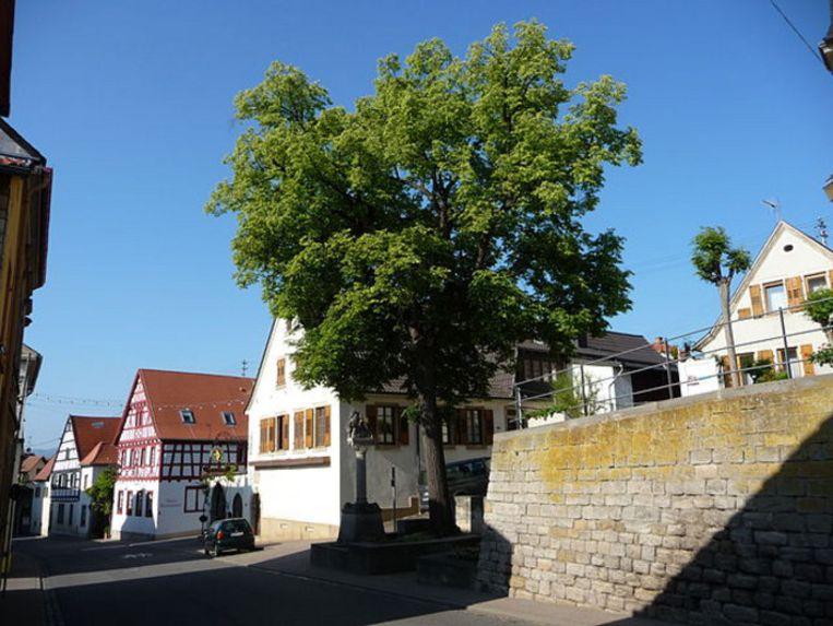 Kallstadt.