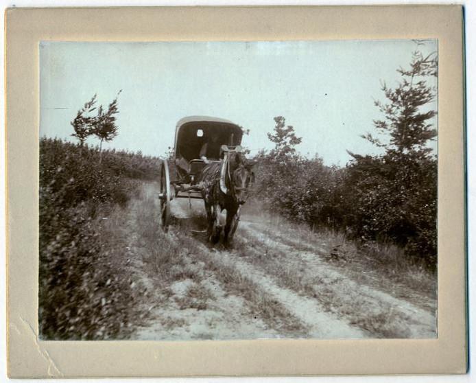 Mastbos, begin vorige eeuw. Een karretje op de zandweg.