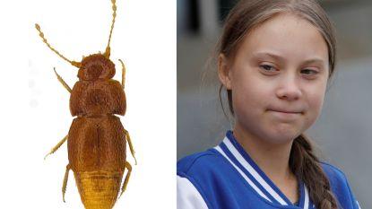 Kleine kever die niet kan vliegen vernoemd naar Greta Thunberg