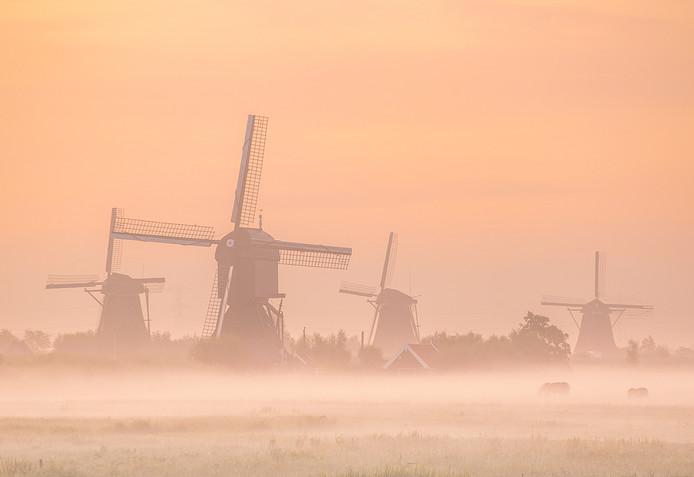 Geen Hoeksche Waard, wel een beeld dat iedereen herkent: de molens in Kinderdijk.