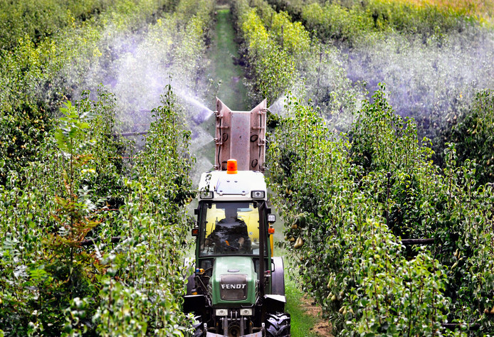 Een tuinder rijdt door zijn perenboomgaard en spuit gewasbeschermingsmiddel op de peren die rijp zijn voor de oogst.