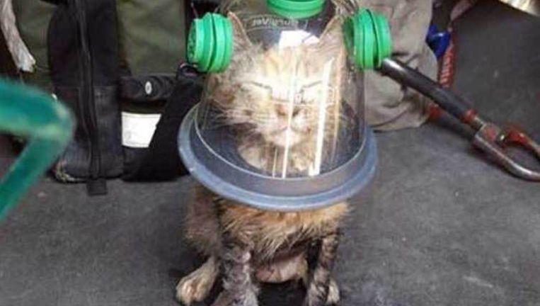 Kat krijgt een zuurstofmasker op maat Beeld Facebook/Rich jensen