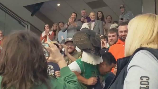 VIDEO. Gigantische zeearend landt op supporters tijdens rugbymatch