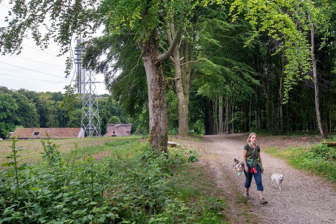 De Diependalselaan in park Mariënwaard, waar hond Sara werd aangereden is.