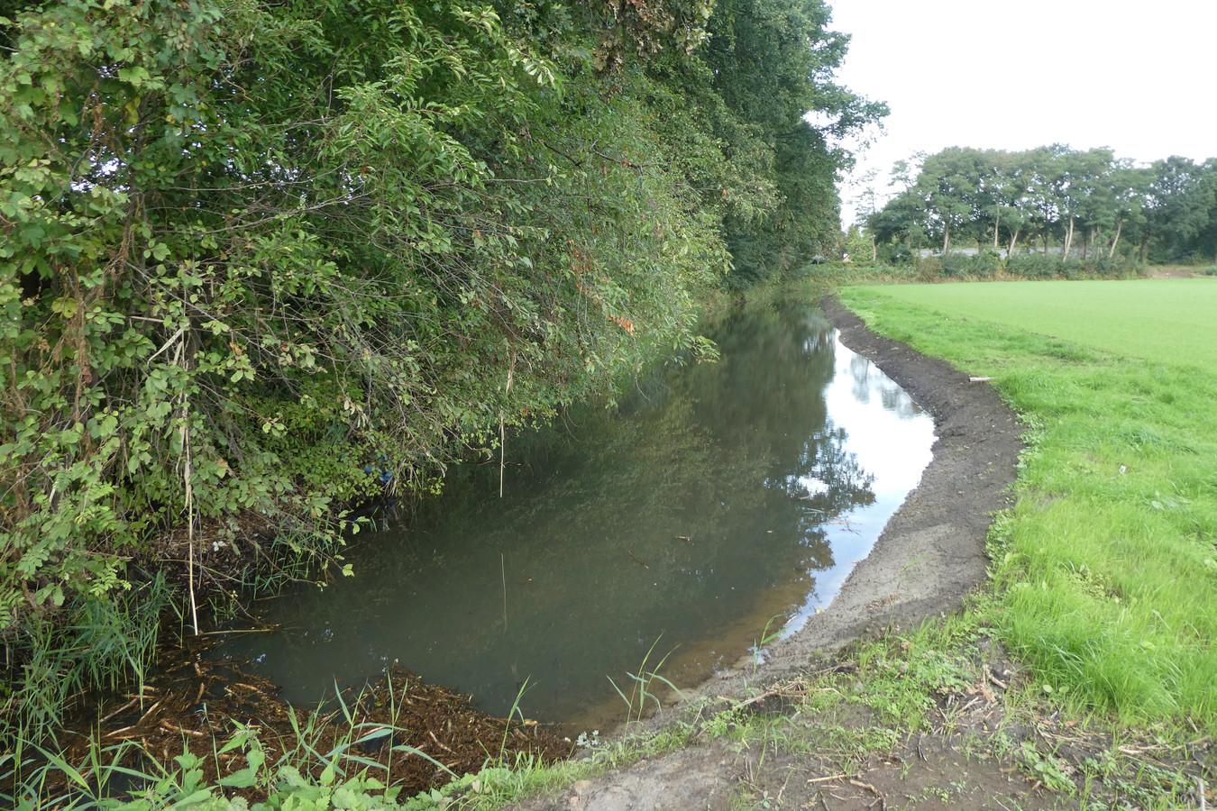 In het gebied van de Dungense Aa zijn weer kwebben aangelegd, moerasplekken pal naast de dijk.