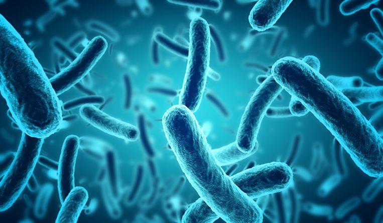 De E. colibacterie.