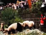 Meisje valt naar beneden in Chinees pandaverblijf