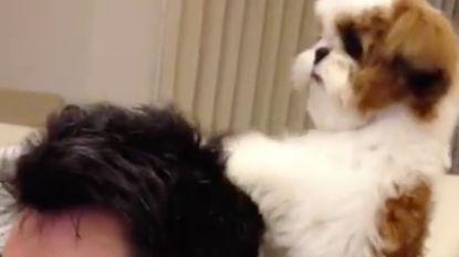 VIRAL3: Man krijgt massage van zijn hond
