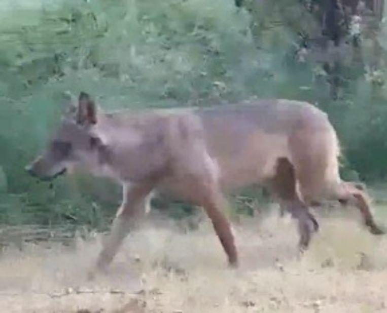 Wolf Billy kon in Duffel gefilmd worden.