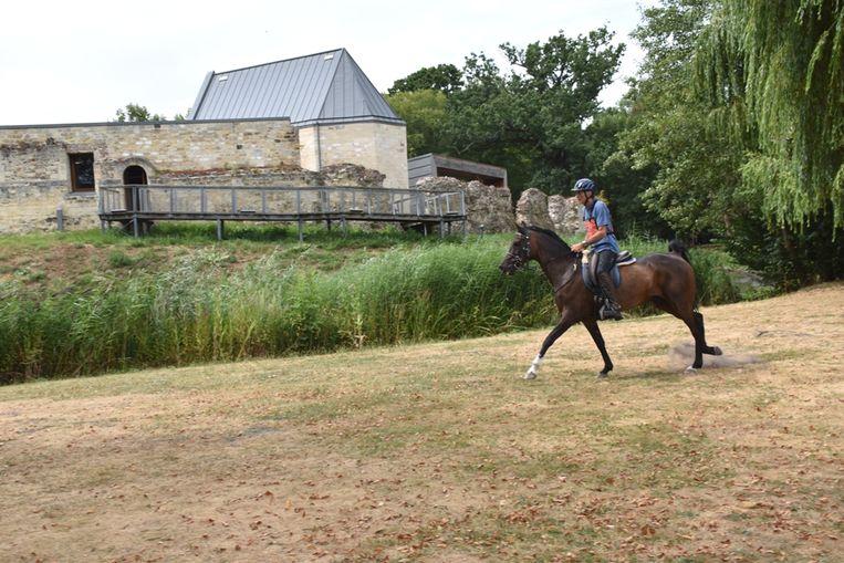 Paardenliefhebbers kunnen hun hart ophalen op domein Pietersheim.