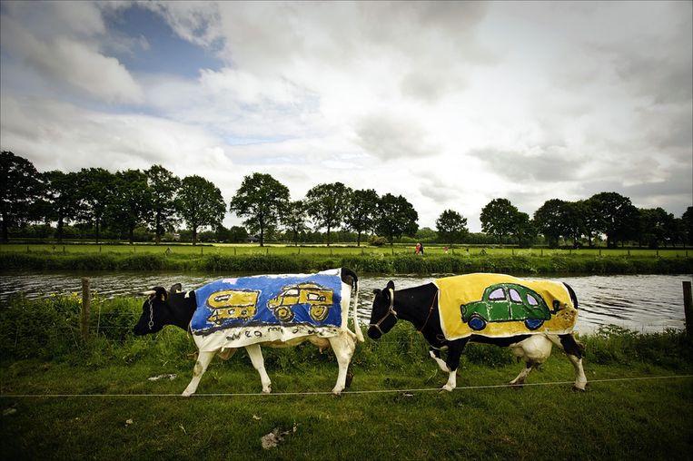 Bij wijze van protest tegen de aanleg van een verbindingsweg door Amelisweerd werd in 2009 een kudde koeien uitgerust met dekjes met de afbeeldingen van auto's. Beeld ANP